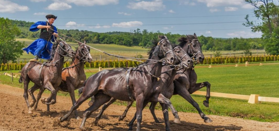 hästar show